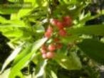 Mudas de frutas e hortaliças