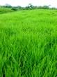 Tenho fazendas a venda nos estados do Tocantins, Maranhão e Pará